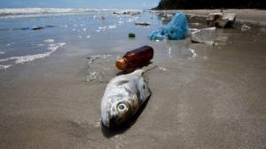 """العثور على """"كارثة صحية"""" في لحوم الأسماك!"""