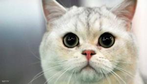 قطة غادرت بيت صاحبها وعادت بأغرب شيء (شاهد)