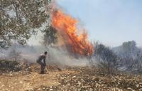 حريق بحديقة عامة في تلاع العلي