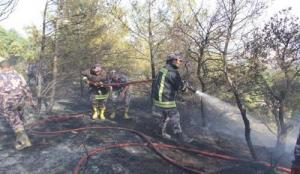 حريق يلتهم 700 دونم من الاعشاب والأشجار في اربد