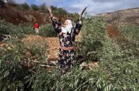 الاحتلال يمنع الاهالي من قطف الزيتون بنابلس