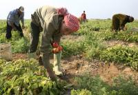 تنفيذ مشروع لتشغيل 1600 سوري وأردني في الزراعة