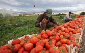 مزارعو الأردن يهددون بالتصعيد