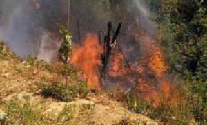 إخماد حريق أعشاب جافة وأشجار حرجية في عجلون
