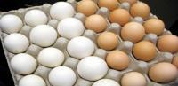 الزراعة لم تبلغ رسمياً بالقرار السعودي بشأن البيض