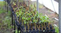 40 % من نباتات العالم مهددة بالانقراض