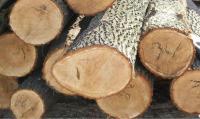 ضبط 30 طنا من الأشجار الحرجية وتحويل المخالفين الى القضاء