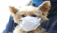 حجر الكلب المصاب بكورونا