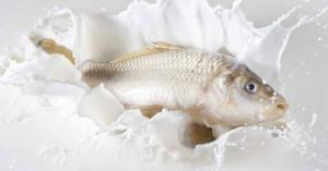 هل تعتقد ان تناول السمك مع الحليب يسبب التسمم ؟