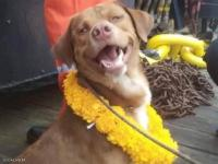 """الكلب """"الناجي"""" ..  سبح 220 كيلومترا قبل إنقاذه (صور)"""