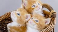 كوارث منزلية تسببها القطط