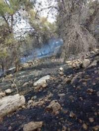 تفاصيل الأضرار الناجمة عن حرائق المزارع بلواء الكورة