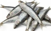 علماء يكتشفون السمكة الأكثر فائدة للإنسان