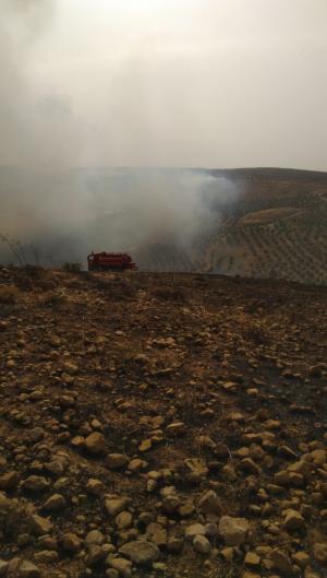 حريق يلتهم مساحات واسعة بين الزرقاء وجرش (صور)