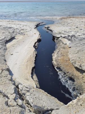 """الحكومة : """"المياه السوداء بالبحر الميت طينية معدنية"""""""