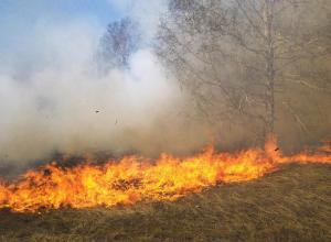 حريق يلتهم 70 دونما أشجارا حرجية بعجلون