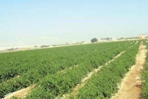 وزير مياه اسبق: قرار حكومي غير قانوني سيظلم الأجيال