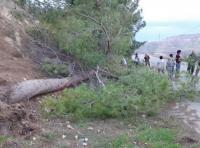 الرياح تقتلع الاشجار في اربد (صور)