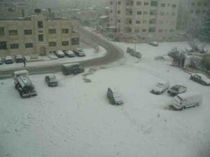 """"""" أوسكار"""" القطبي يزور الأردن  الجمعة"""