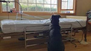 كلب ينتظر صاحبة المتوفى بإصرار! (شاهد)