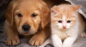 دبي : اتفقا على الطلاق وحضانة الأطفال واختلفا على رعاية حيواناتهما الأليفة!