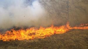 القبض على شخص حاول افتعال حريق بمزروعات في اربد