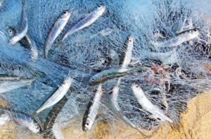 مخالفات بالجملة يرتكبها صيادو الاسماك تحت مظلة المتنفذين!