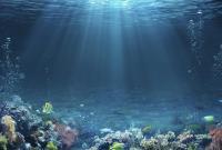 بالصور ..  تعرف على أغرب الكائنات البحرية
