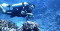 علماء ينجحون فى تحويل مياه البحر إلى وقود!