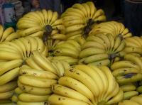 هل فعلاً يؤدي الموز الى البدانة؟