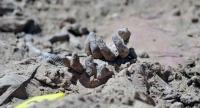 العثور على مقبرة جماعية في الرقة السورية
