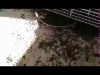 هذه أسباب موجات الذباب غير المسبوقة بالجنوب (فيديو)