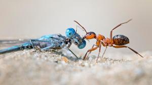 تراجع أعداد الحشرات يهدد الحياة على الأرض