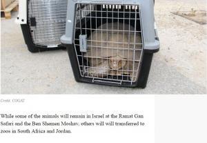 """""""ترحيل حيوانات"""" من غزة لمحمية أردنية (صور)"""