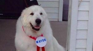 كلب يُنتخب عمدة لمدينة أمريكية للمرة الثالثة