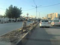 بلدية إربد توضح حول قطع الأشجار