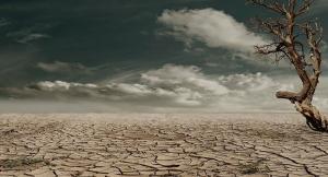 الجفاف يسبب نقصا حادا في القهوة والسكر في المستقبل القريب