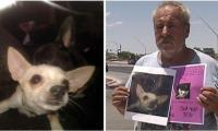أميركي يمنح منزله لمن يعثر على كلبته