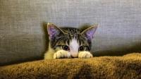 قطة تتابع مسلسلا تلفزيونيا بشغف! (فيديو)