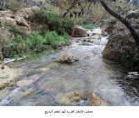 عجلون: الأمطار الغزيرة تُمهّد لتفجر الينابيع