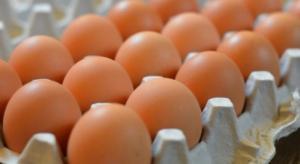 فوائد مذهلة لقشر البيض