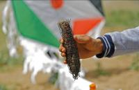 بعد 70 عاما من النكبة  ..  طائرات غزة الورقية تسطر الغضب الساطع (صور)
