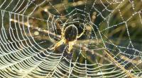 عدسات من حرير العنكبوت لتصوير الجسم من الداخل