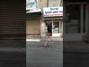 ازالة البسطات من سوق السكر بوسط البلد وفتحه أمام المشاة (فيديو)