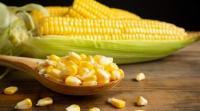 يحفز الهضم ..  9 فوائد صحية للذرة الصغيرة