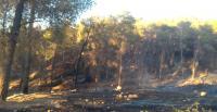 الجيش والدفاع المدني يشاركان في اخماد حريق ضخم شب من الجانب المحتل