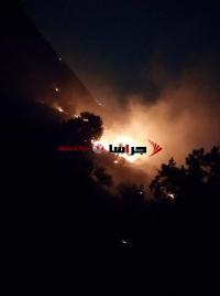 النيران تلتهم 60 دونما من الأعشاب والأشجار بإربد (صور)