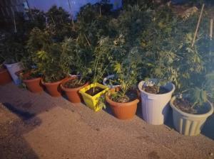 """القبض على 3 اشخاص زرعوا """"الماريجوانا"""" بمنزل في طبربور (صور)"""