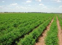 9 ملايين دونم أرض صالحة للزِّراعة في الأردن