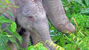 """حبوب """"منع حمل"""" للرجال من سم الفيلة!"""
